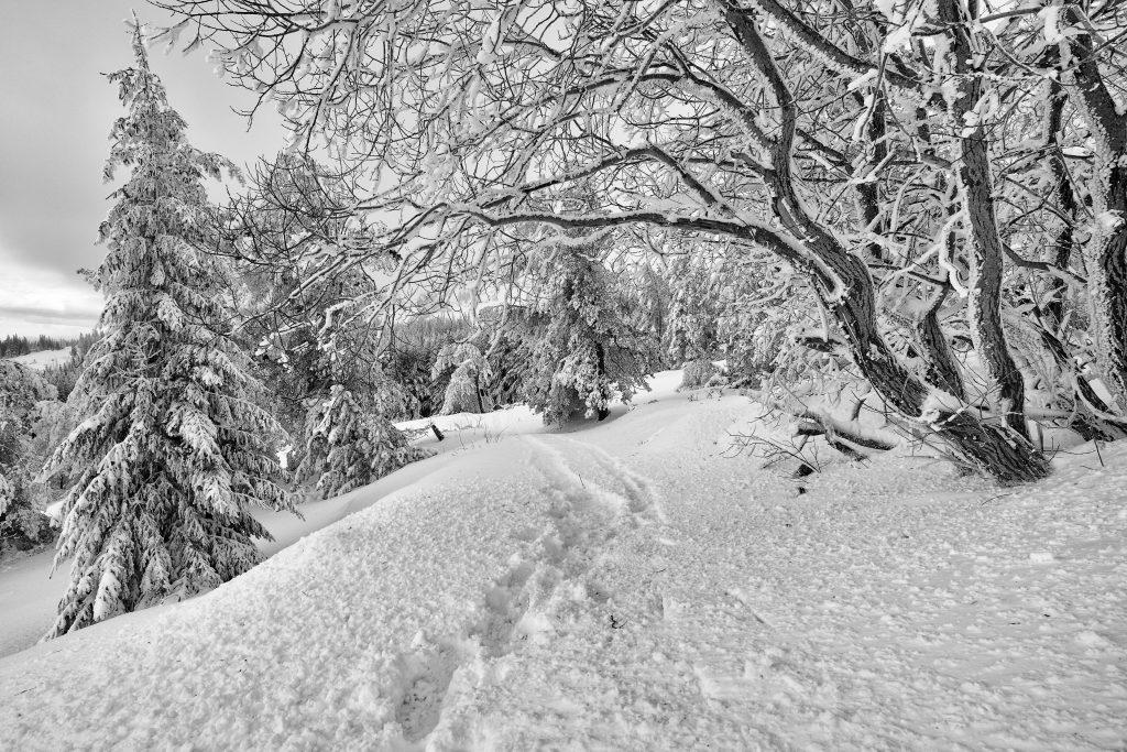 Impronte nella neve, impronte nella testa